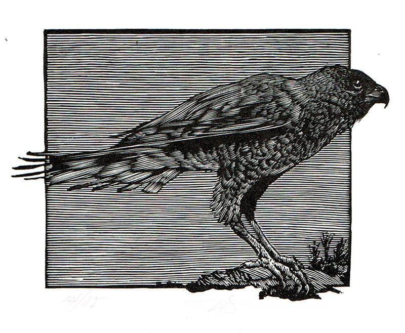 The Hawk of May