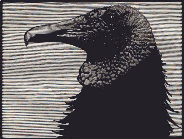 The Vulture II