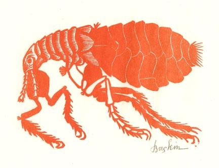 Flea (Orange)
