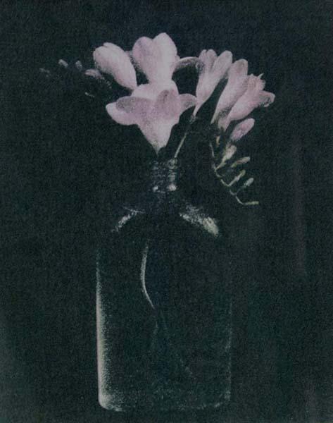 Freesia (Dark Background)