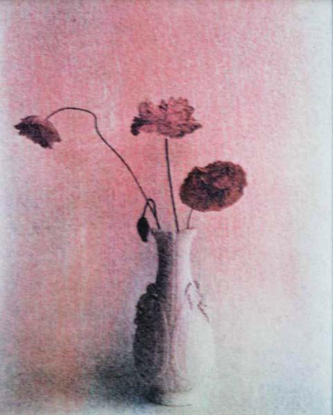 Poppies (Light)