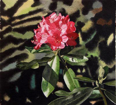 Single Red Rhododendron