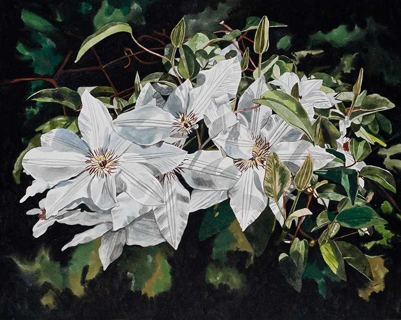 White Clematis II
