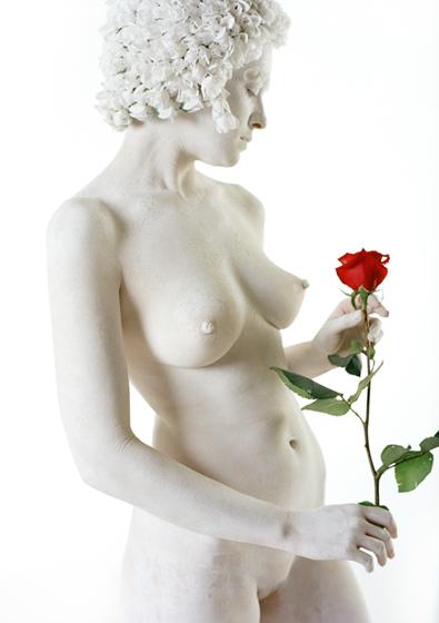 Curls Red Rose
