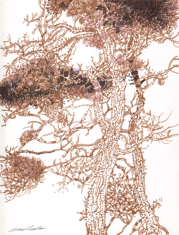 Cape Cod Pine