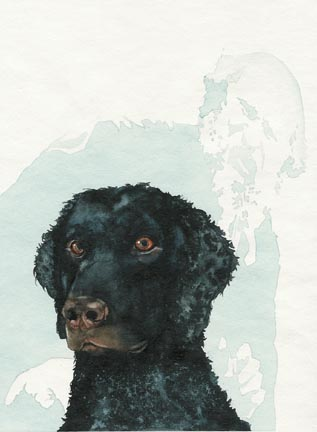 The Curly Coated Retriever and Spirit