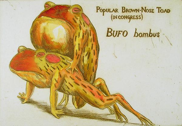 Popular Brown Nose Toad