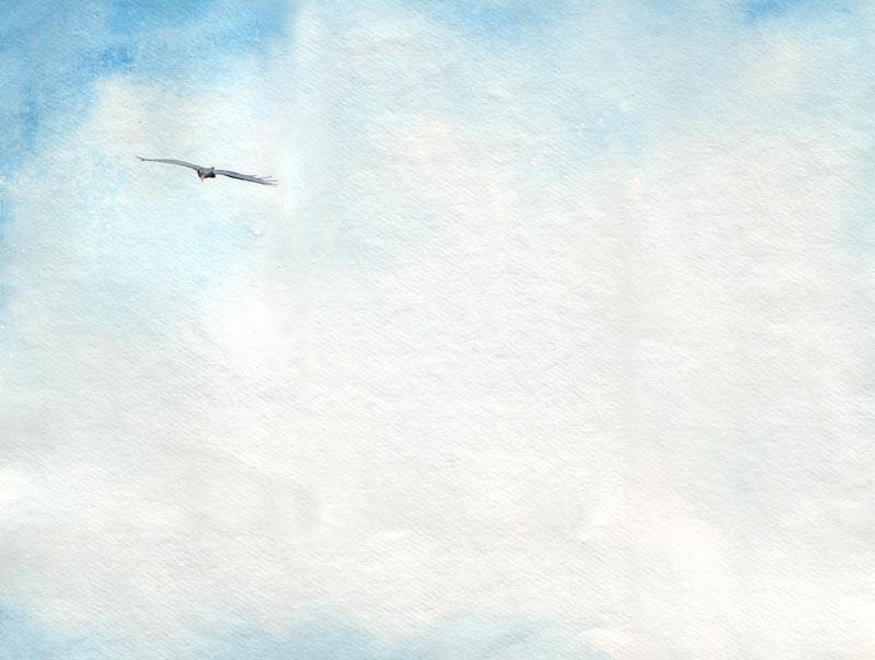 Bruh Buzzard and Bruh Wren Flying High