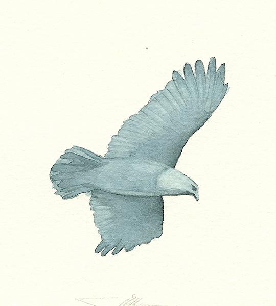 Grey Bird (contents page)