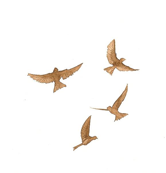 The Flock of Brown Birds