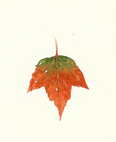 Upside Down Leaf