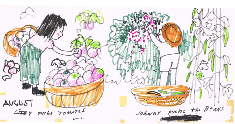 Picking Tomatoes and Beans