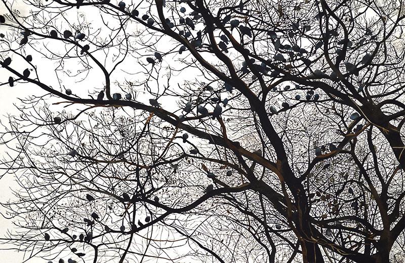 Birds 40x60