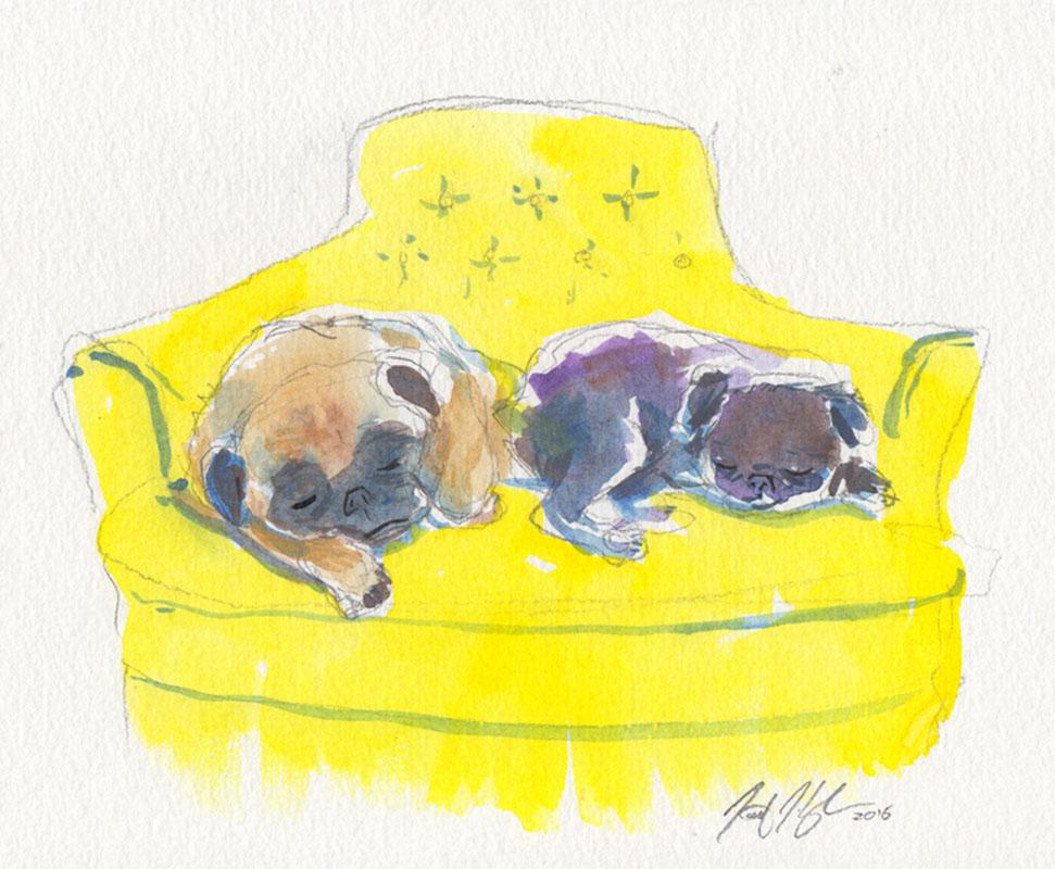 Two Pugs Sleeping