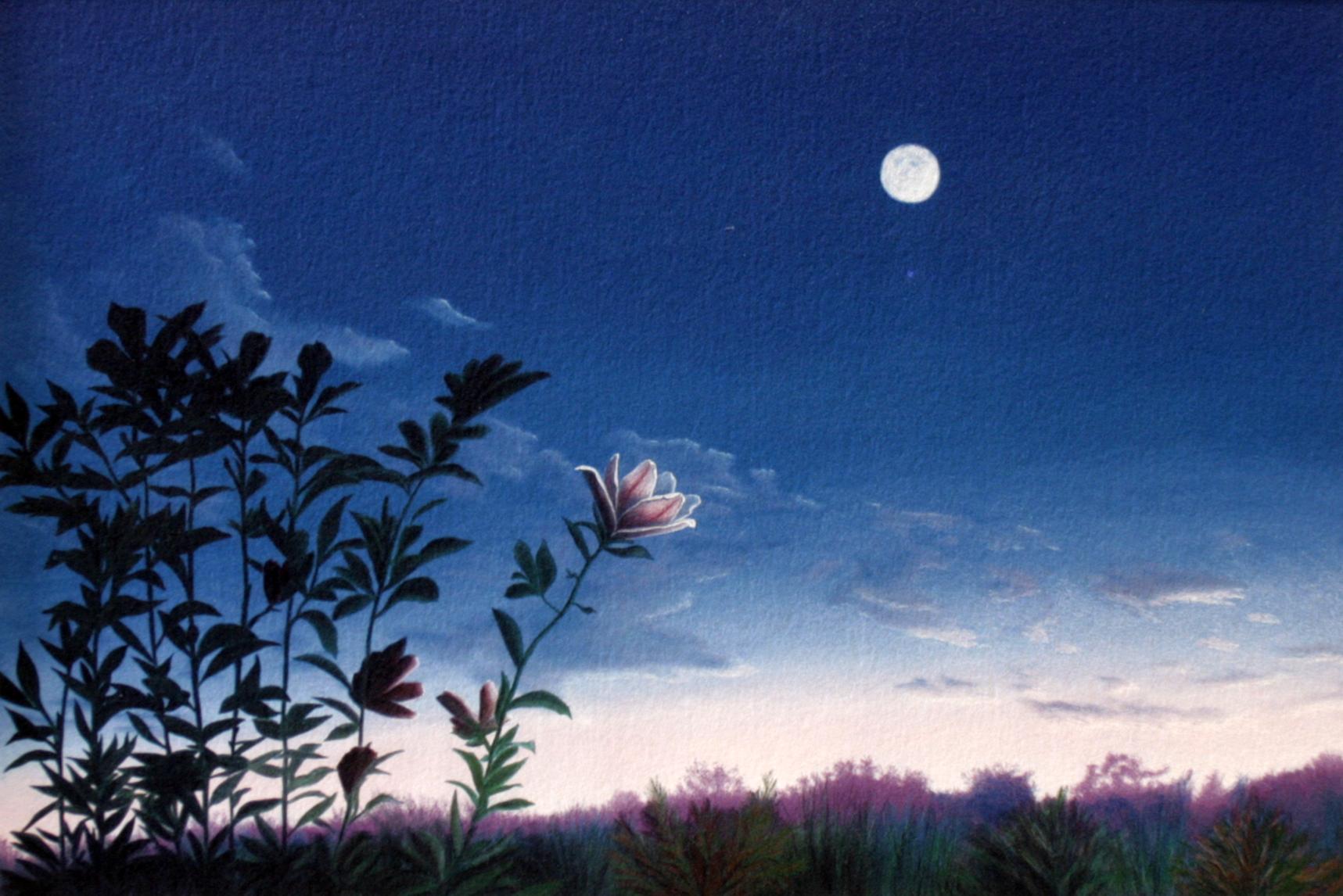 Magnolia Moonlight