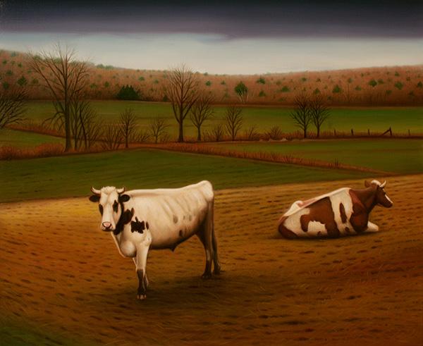 Bulls at Goshen Farm