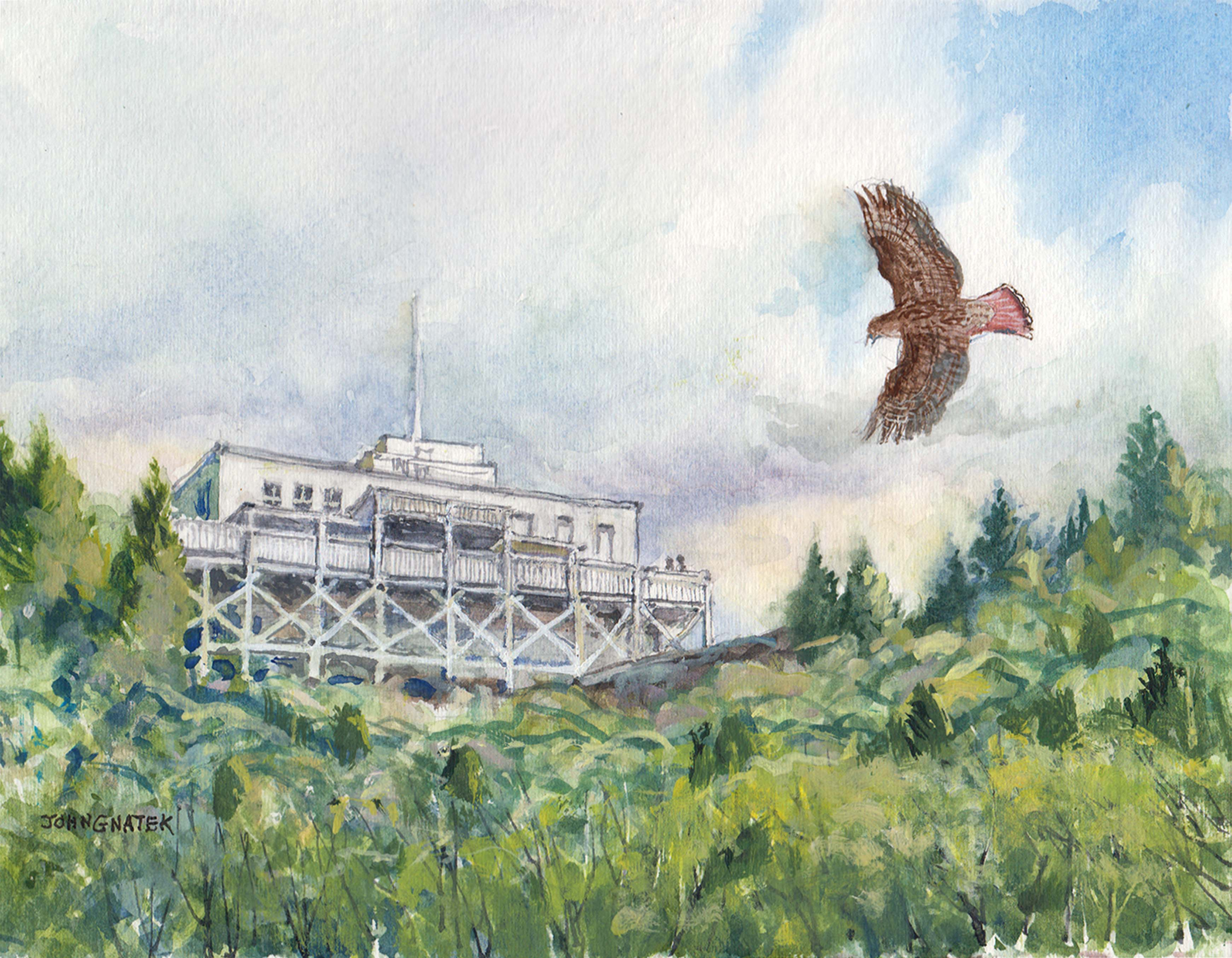 Redtail Hawk and Hadley Summit House