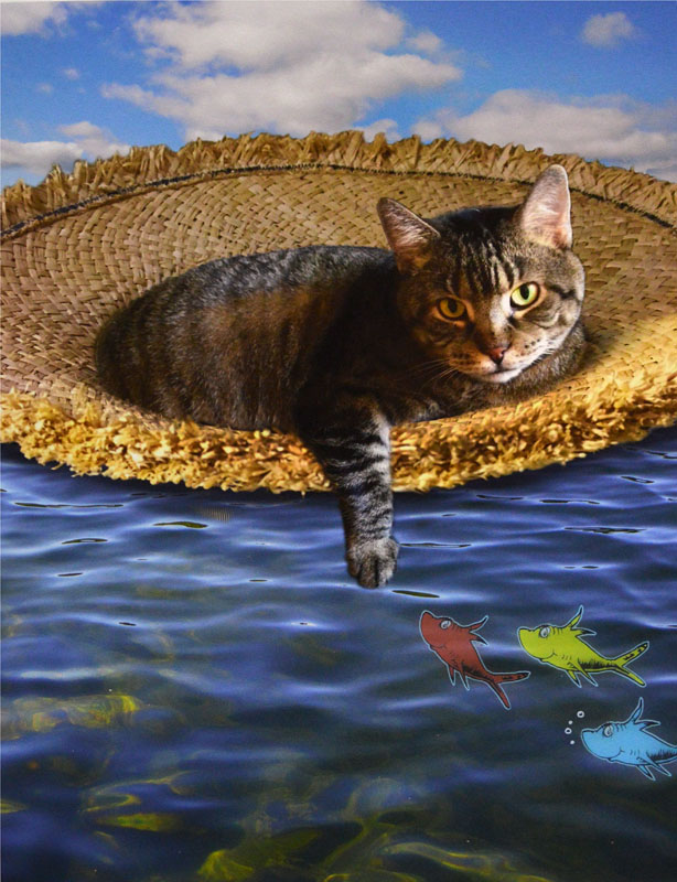 Fish-One, Two, Three-an a Cat Floating in the Sea!