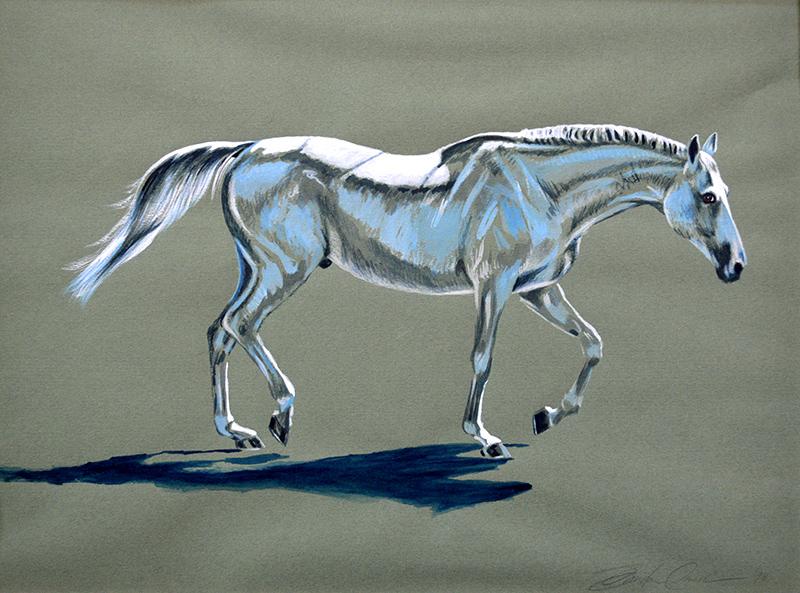 Selle Francais Stallion 1