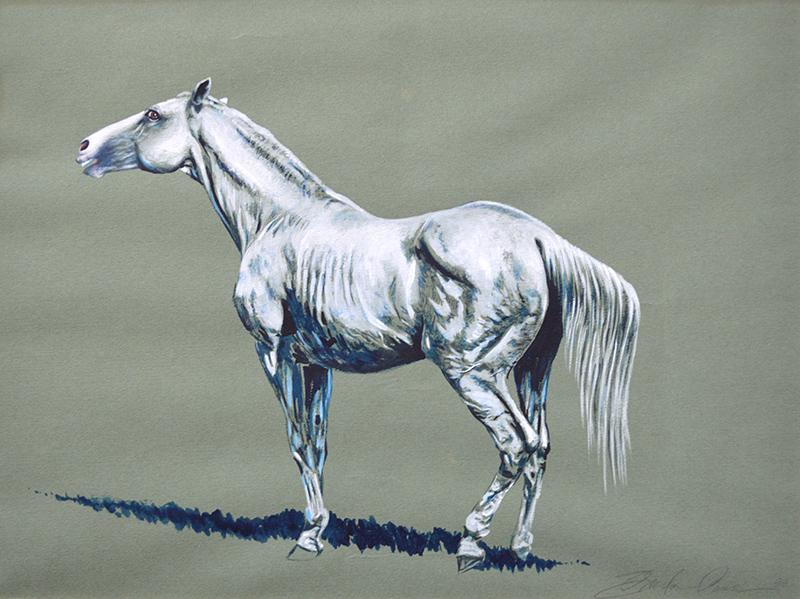 Selle Francais Stallion 2