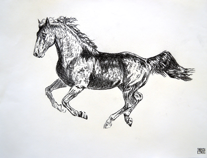 Study-for-Morgan-Black-Stallion-18×23