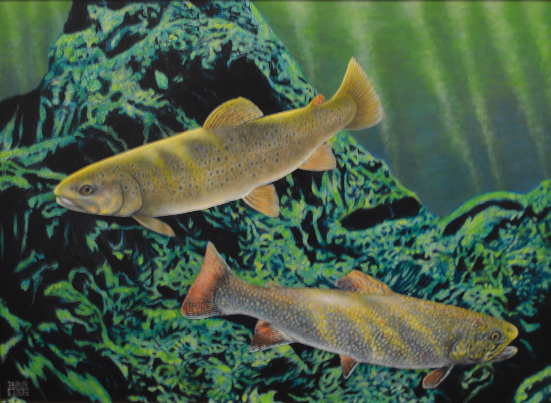 Brown Trout / Brook Trout