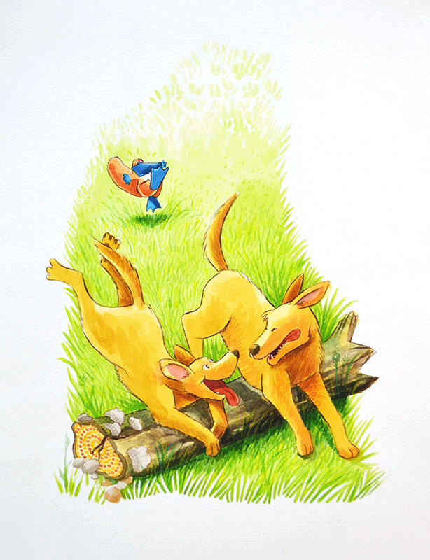 Dingoes Chase