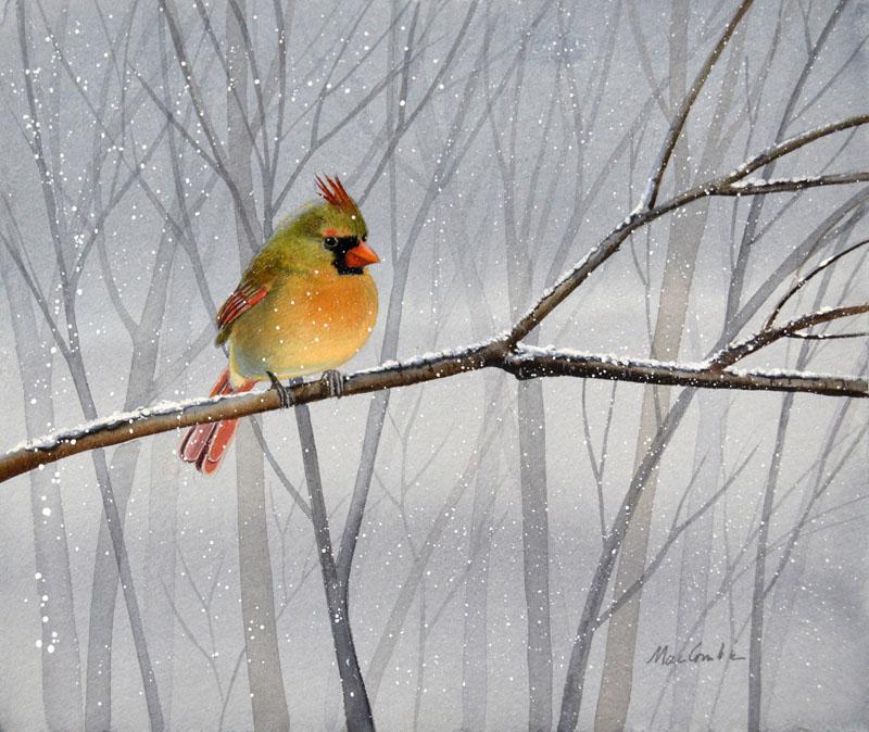 Cardinal Looking Right