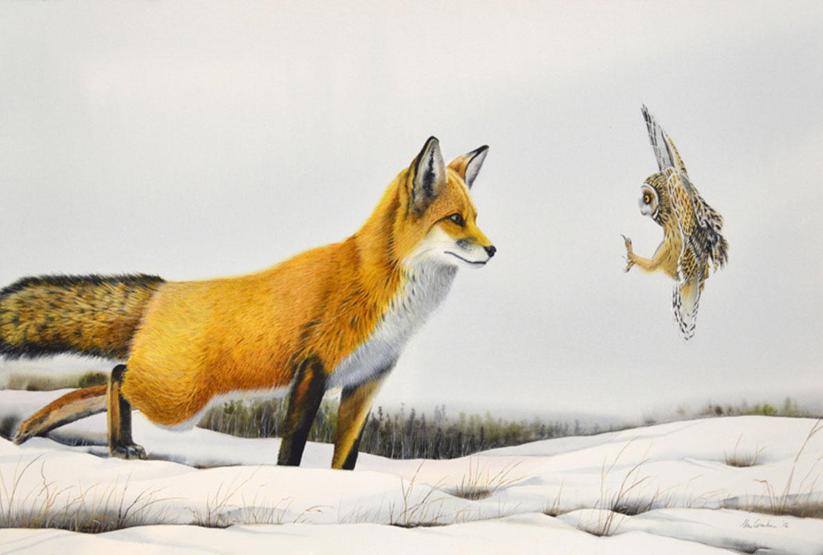 Fox and Owl Confrontation I