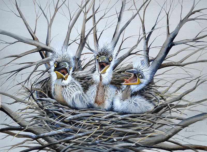 Three Baby Herons