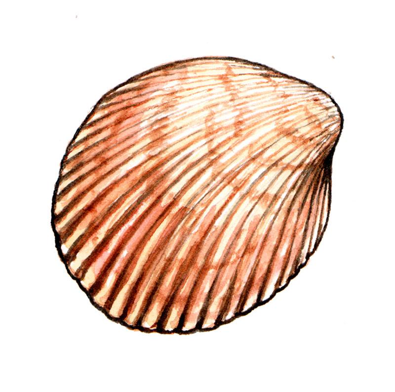 Arc Shell