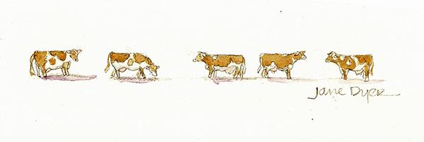January Cows
