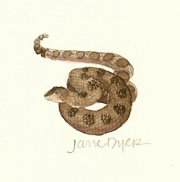 July Rattlesnake