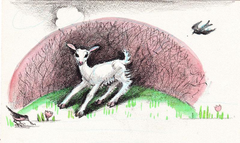 Kacheeka the Little Goat Color