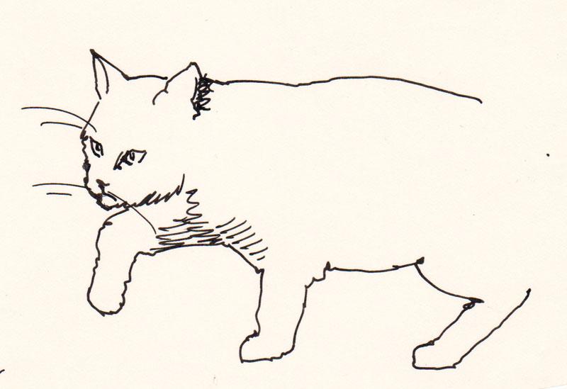 Jeoffry Cat I