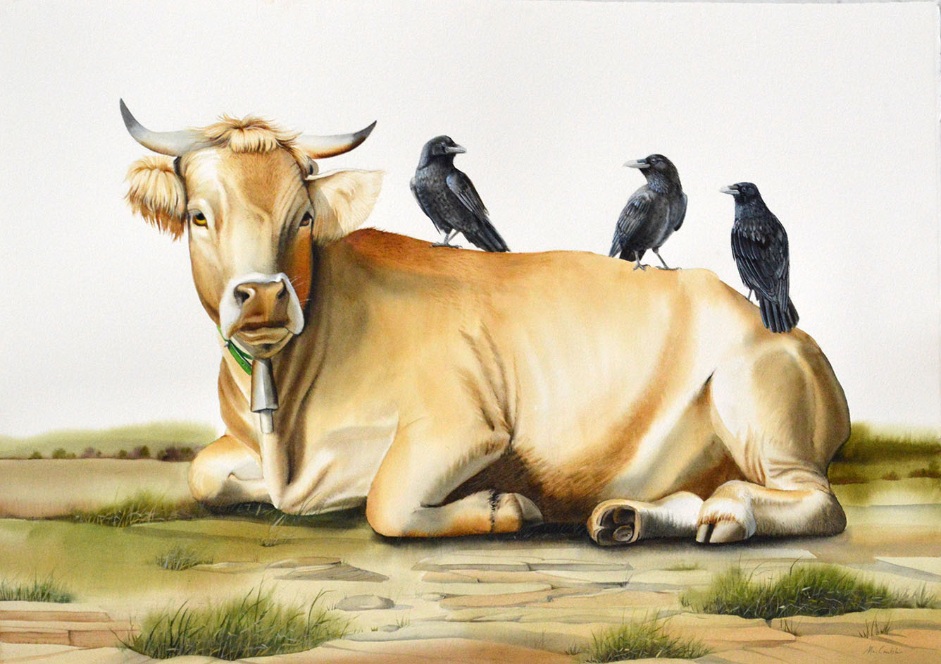 Cow with Ravens