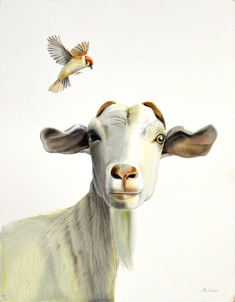 Goat and Sparrow