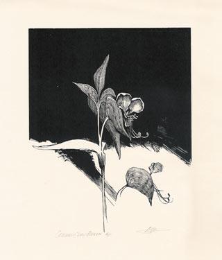 Common Dayflower