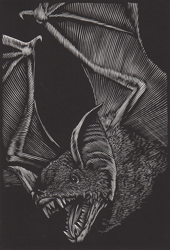 One Of Those Big Bats They Call Vampires 6_25x4_25