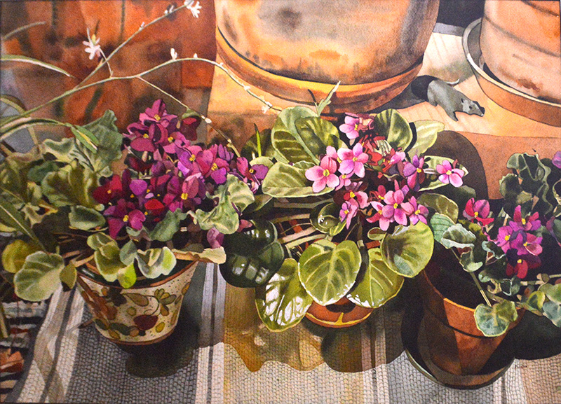 Three African Violets