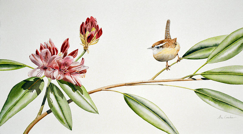 Wren and Rhododendron